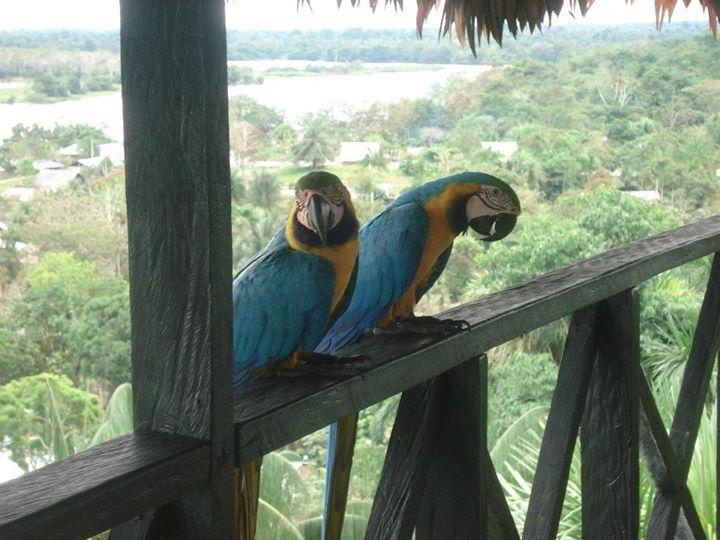 (LETICIA-AMAZONAS) COLOMBIA