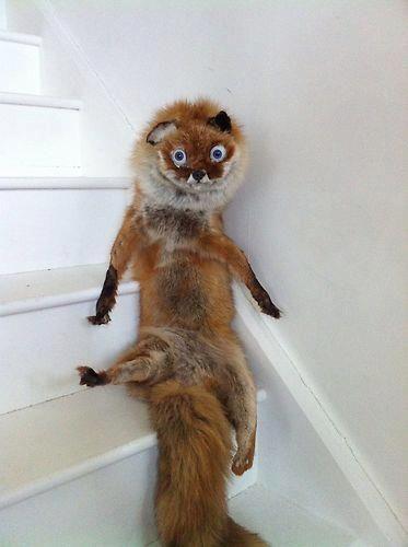 Scary Stuffed Animals   Badly stuffed animals- hahahahahaha!!!!!!!  His eyes!!!