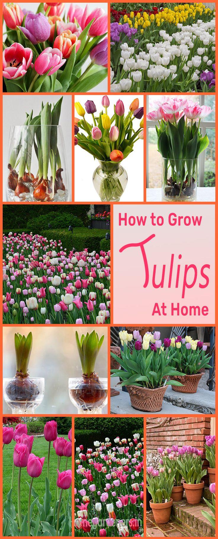 1135 best garden best gardening tips and ideas on pinterest