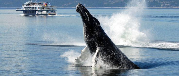 Baleines au Cap