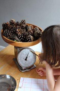 weighing pine cones - great ideas for STEM / math investigation in this pine cone math station
