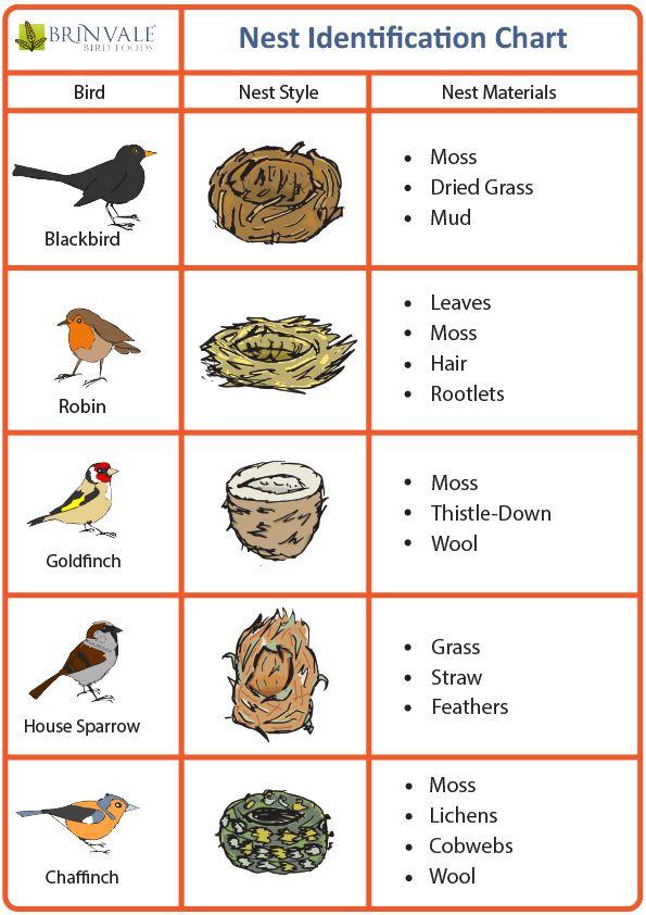 Bird Nest Identification Chart Related Keywords Bird Bird Egg Identification Guide And Texas Birds Bird Eggs Backyard Birds Watching Bird Egg Identification