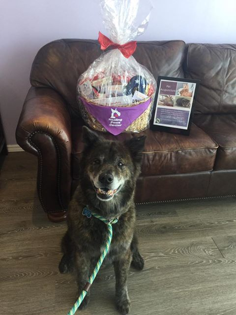 """Shared from Good Karma Pet Rescue for the  Wags, Whiskers, & Wine Fundraiser: """"Just picked up this beautiful raffle basket from Healing Paws Center that has a gift certificate inside for a consultation and acupuncture package valued at $500! 🙀 Our adorable model Forrest 🐶 is a dedicated Good Karma volunteer and he just went for his first consult to help him battle some pesky skin allergies and make sure he's on the best nutritional and supplement plan possible for his golden years! ..."""""""