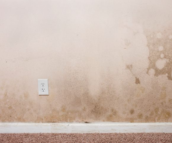 6 Tips For Cleaning Mold Off Painted Walls For The Home