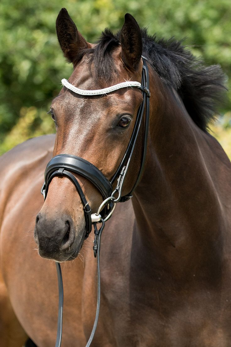 The Premiera Valentia is a luxurious, handcrafted dressage bridle. Stunning leather, a wide soft leather noseband, a dazzling curved bling browband, and near invisible closures make this your perfect