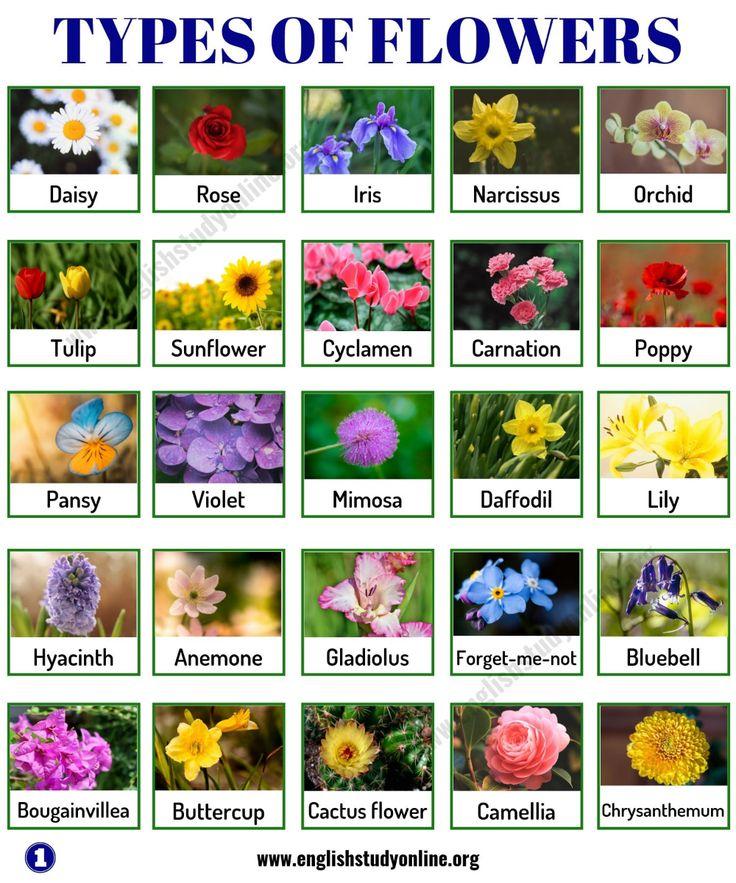 Types of Flowers List of 50+ Popular Flowers Names in