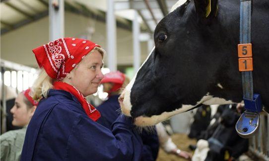 #Koe #knuffelen op  #FarmCamps #Breehees #cowcuddling