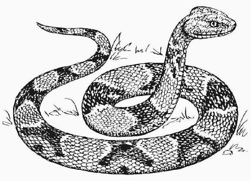 Snake Coloring Pages Free Coloring