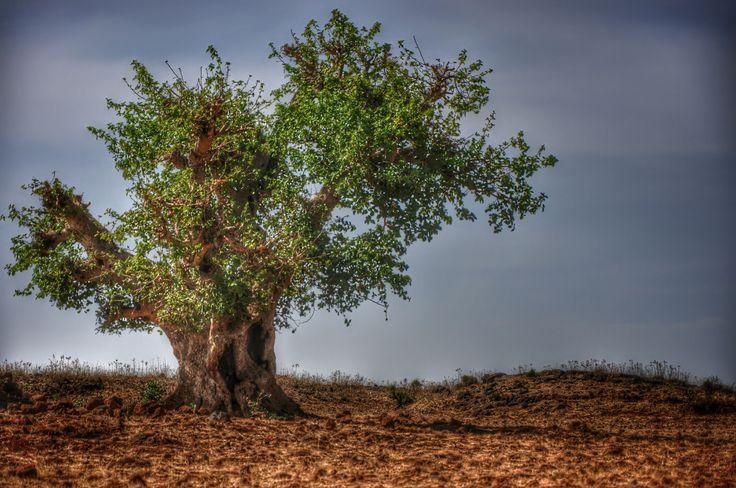 The tree on desert