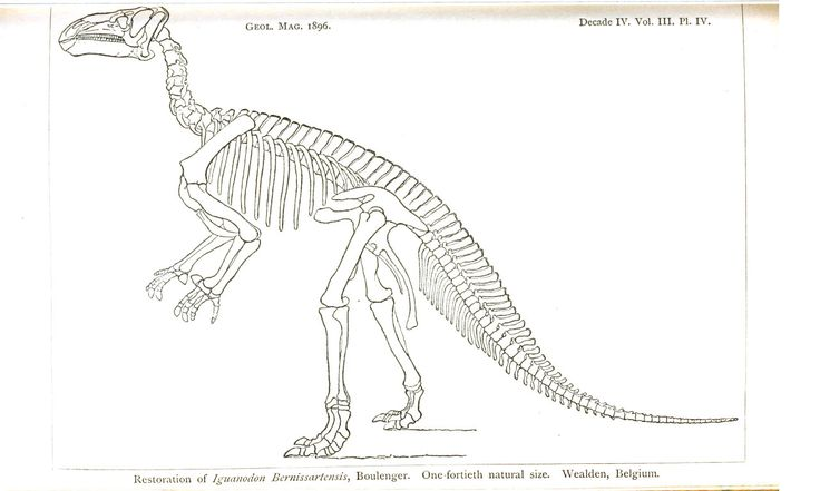 Dinosaur Skeleton Outline Google Search Work Ideas