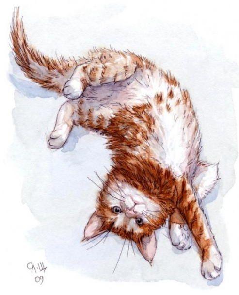 Orange cat paintings. Svetlana Ledneva-Schukina - Orange kitten stretch