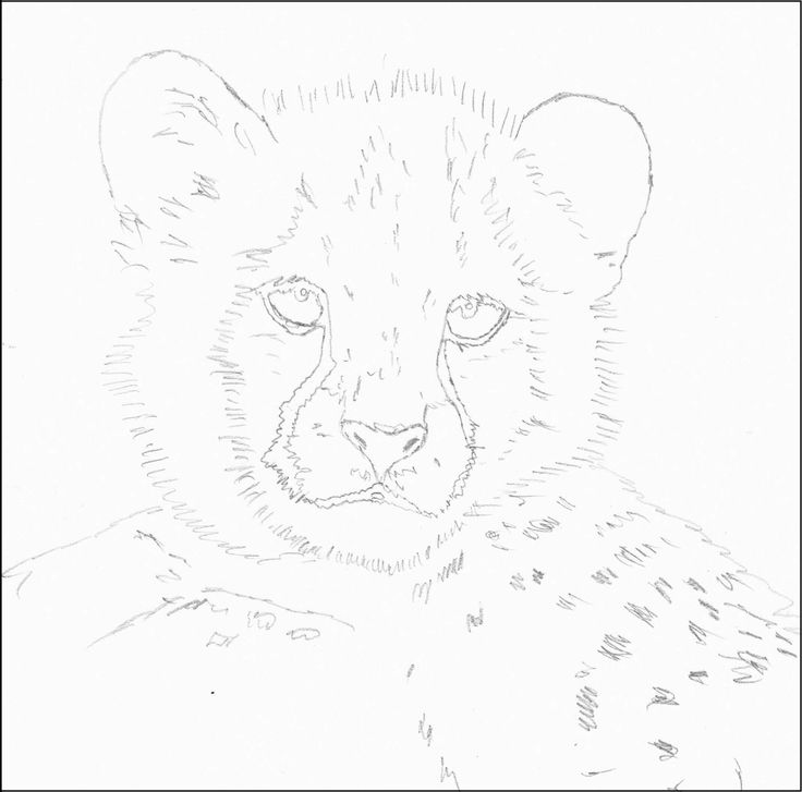 how to draw a cheetah step by step slowly