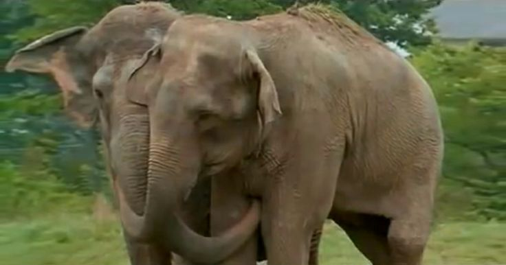 Two Elephants Who Treated Each Other Like Family Reunite After 20 Years Apart ♥