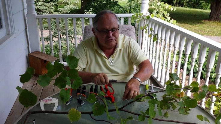 Review of Pruners Making Small Cuts Video #2 of 3 #prunersreview #pruners #smallcuts #prunerssmallcuts
