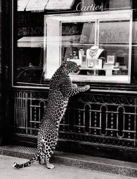 cheetah with taste