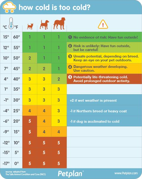 How cold is too cold for your dog? Use this chart from Petplan pet insurance to find out!