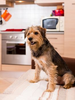 Top 7 Tips for Apartment Living with Dogs.  This will be great info for my son, when he moves out and takes his doggie whom I care for most of the time.