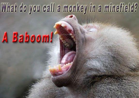 worlds funniest anmials | World's Funniest Jokes