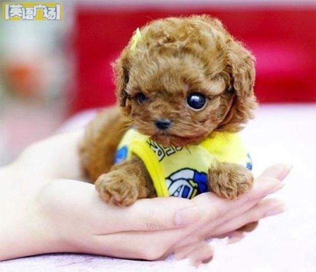tiny dog | Cute Animals | Pinterest | Dog, Animal and Doggies
