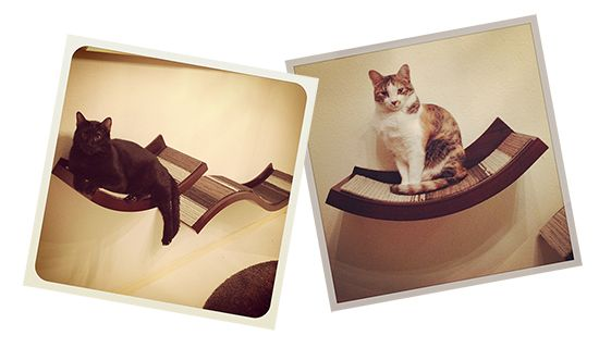 241 Best Cat Shelves Condos Trees Amp Perches Images On