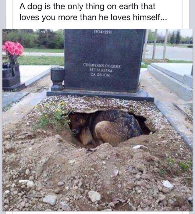 this is the saddest thing I've ever seen.