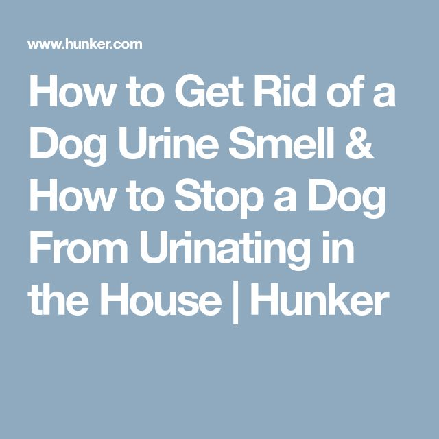 How To Get Rid Of A Dog Urine Smell U0026 How To Stop A Dog From Urinating In  The House