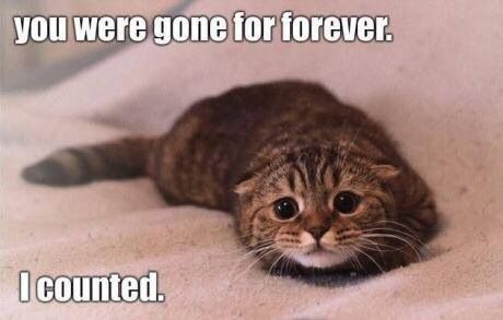 you were gone forever... I counted