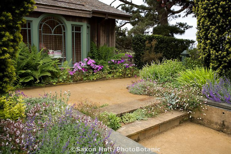 Decomposed granite (dg) path and stone steps with flowering perennials in California garden