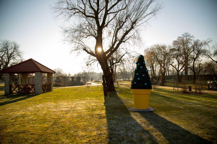 Lubin: giganty w świątecznym przebraniu   christmas decor for cities by terrachristmas - giano large flower pot nuno'ni
