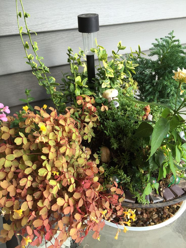 Late summer 2015... the foliage has gone wild!