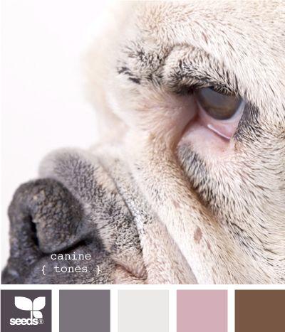 canine tones : bulldog