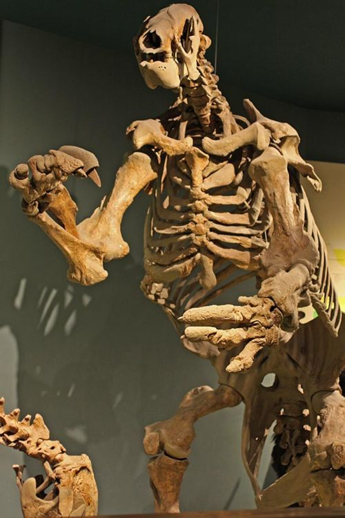 The Smithsonian's Giant Ground Sloths - Digging the Fossil Record: Paleobiology at the Smithsonian