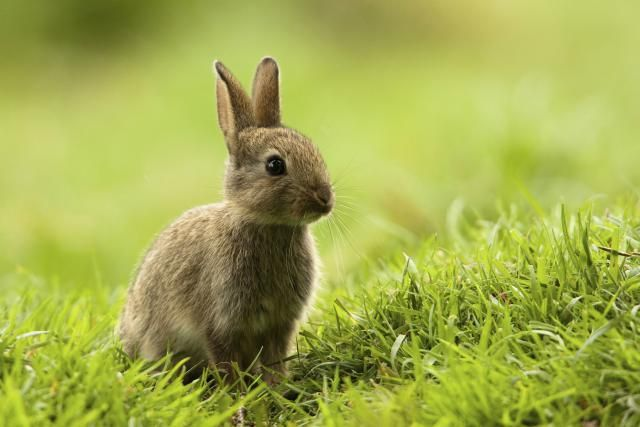 2015 Chinese Zodiac Signs Good Luck Tips: Rabbit Zodiac Sign in 2015
