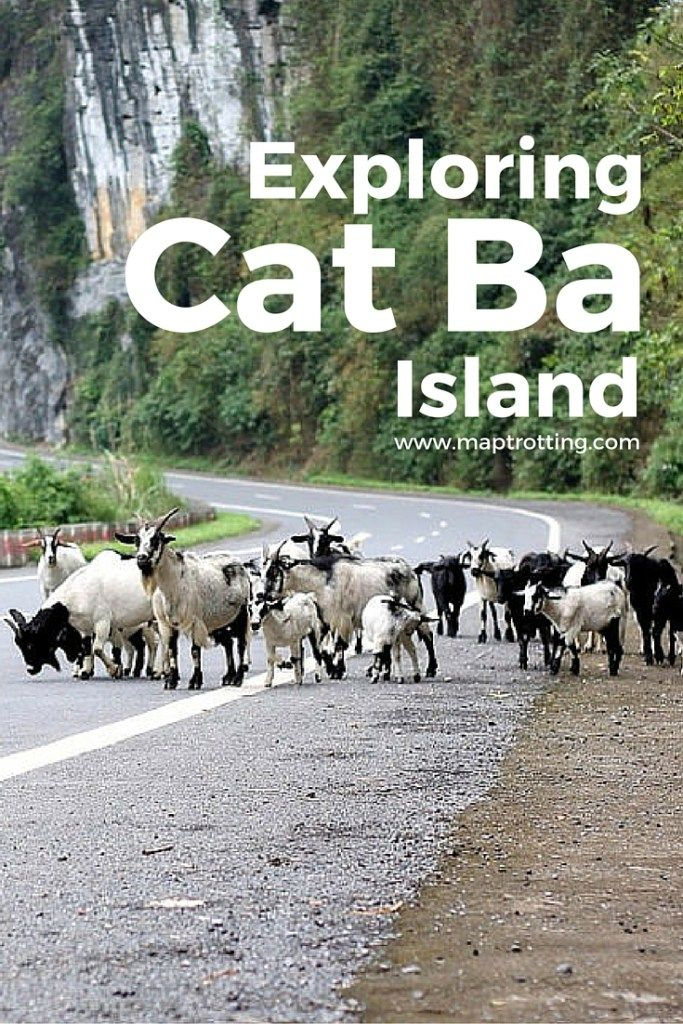 A quick guide of things to see and do when exploring the stunning Cat Ba Island in Northern Vietnam. Great places to visit around the island.  Cat Ba Island   Vietnam   Vietnam Travel   Exploring Vietnam   Visiting Vietnam   SE Asia Travel   Southeast Asia   Couple Travel   Exploring Cat Ba   Visiting Cat Ba   See and Do in Cat Ba   Travelling Vietnam   Cat Ba