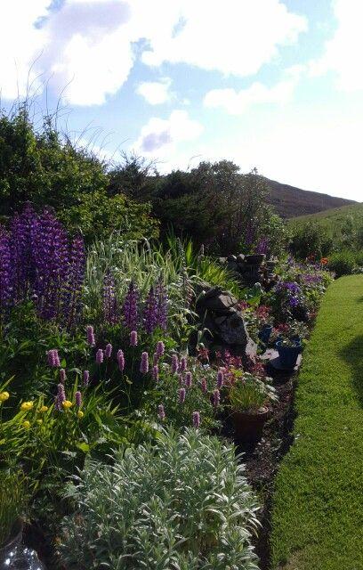 Flower border in Shetland