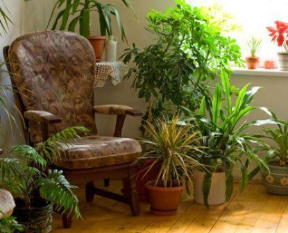 grose wohnzimmer pflanzen. die besten 25+ wohnzimmer pflanzen ... - Grose Wohnzimmer Pflanzen