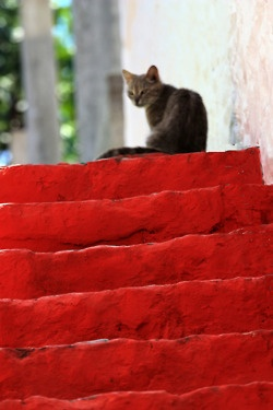 Cat on red steps in Hydra Island, Greece.