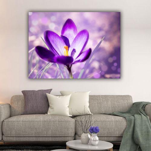Crocus Flower πίνακας σε καμβά