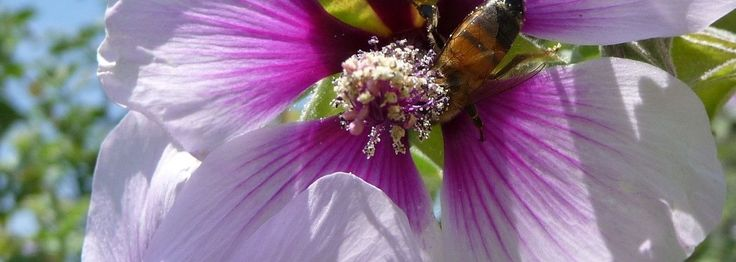 Three Beautiful, Beneficial, Edible Flowers