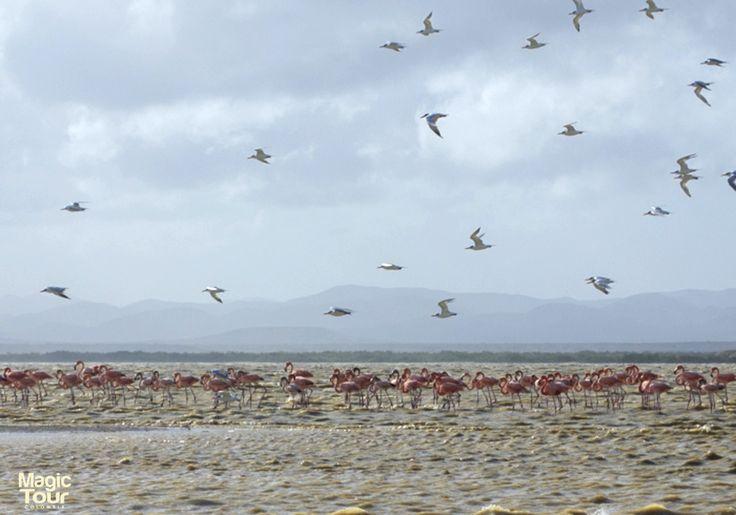 Punta Gallinas, La Guajira #WeLoveTrave #Adventures #Cultures