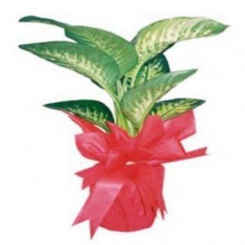 Kocaelide salon bitkileri açılış çiçekleri www.goksallarcicekcilik.com