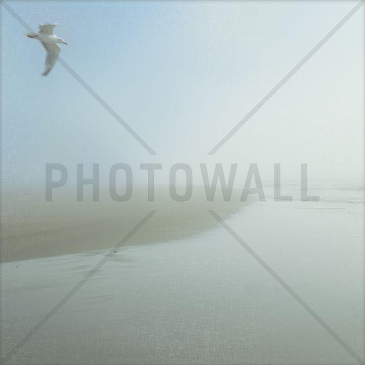 Seagull Morning - Tapetit / tapetti - Photowall