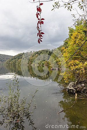 Leafs and colours of autumn in the forest ot the lake in Rożnów ,  Poland.