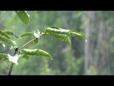 Rain-Beautiful Nature 5 (playlist)
