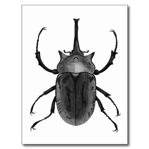 Beetle Black and White Drawing Postcard