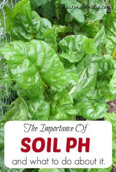 Your Soil PH effects how everything in your garden growes. Find out how to check and fix your soil PH. And have a better vegetable garden and healthier plants.