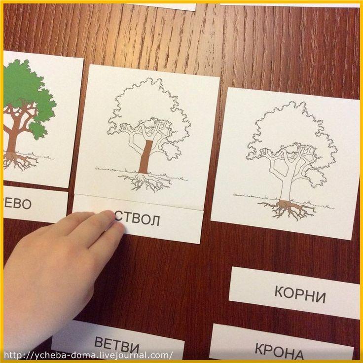 Царство растений - HOMESCHOOLING по-русски