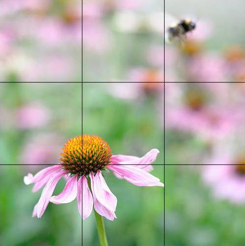 HOW TO APPLY THE GOLDEN RATIO TO PHOTOGRAPHY