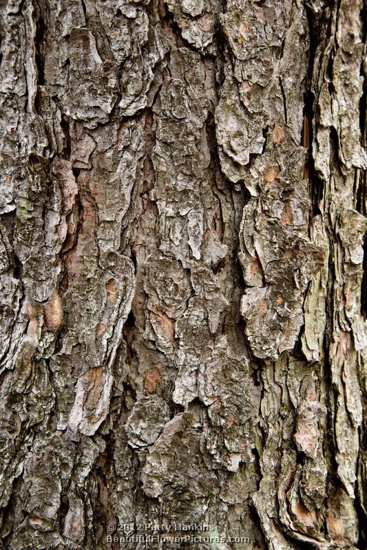 21 best NaTuRe FoR KiDS images on Pinterest | Nature for ... Different Types Of Tree Bark