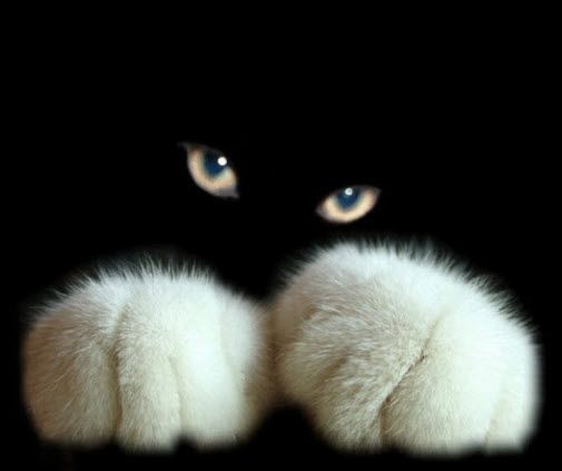 15 Cute Pictures of Cat's Paws